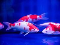 养风水鱼有利财运,室内养这些风水植物就对了!