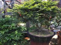 进门摆什么绿植风水好?大门口放盆栽会破坏风水吗?